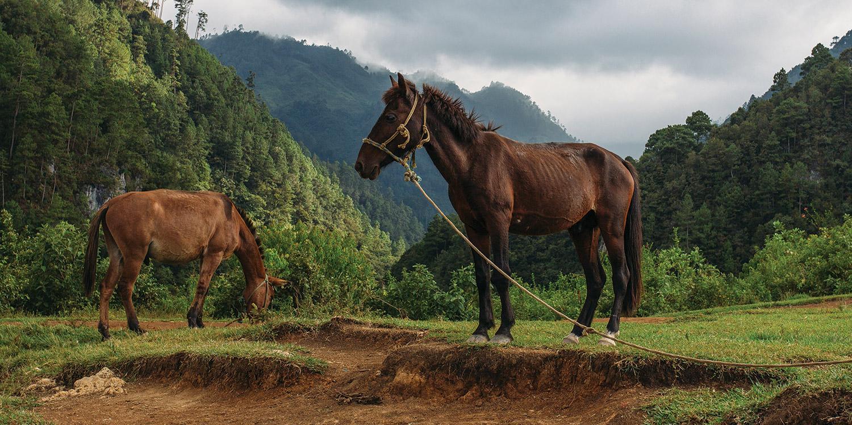 Horses in Guatamala