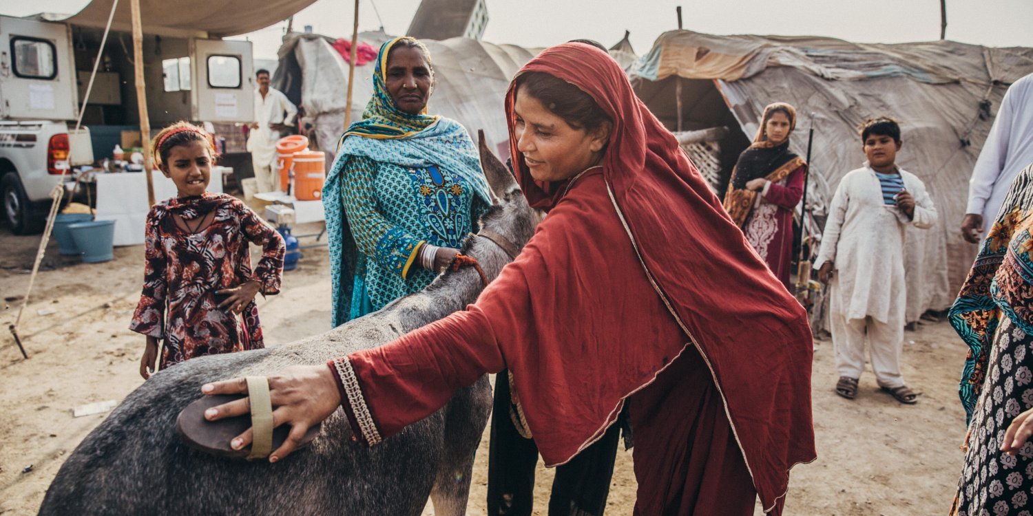 Woman grooming donkey as her community looks on