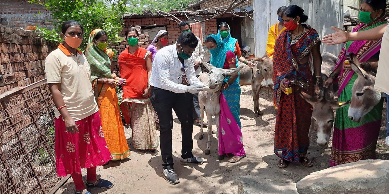 Working horse in village