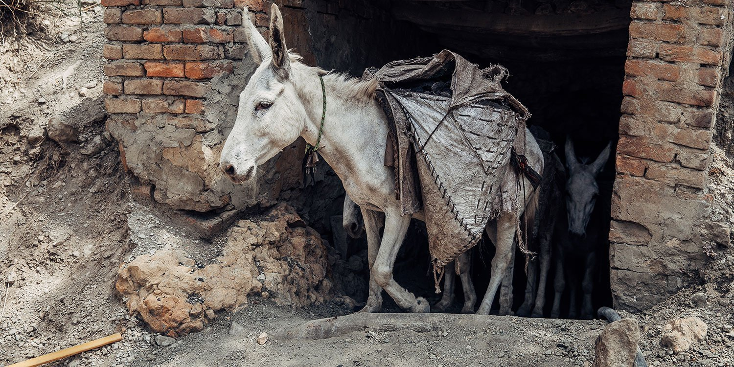mule emerging from a coalmine in India