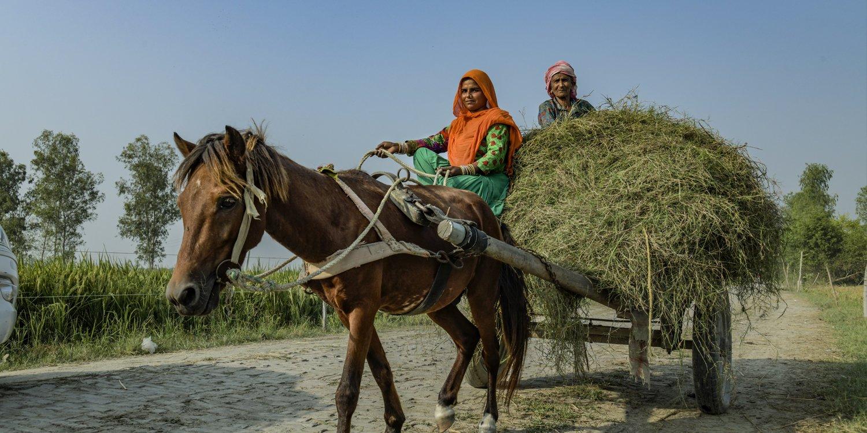 Working horse