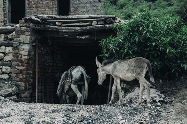 Donkeys entering coal mine