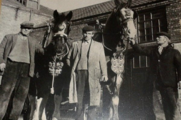 Photo of Colin Nicholls (on left) with Dolly an Irish draught mare and Captain, a Clydesdale. This photo was taken on 11.11.1970 and the horses were decorated with poppies made by Eileen and her sister, Alexandra.