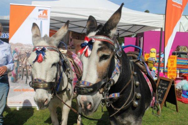 Blackpool Beach donkeys