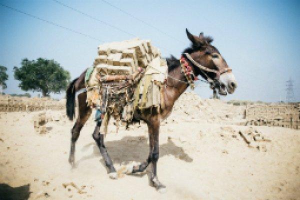 Brick kiln donkey