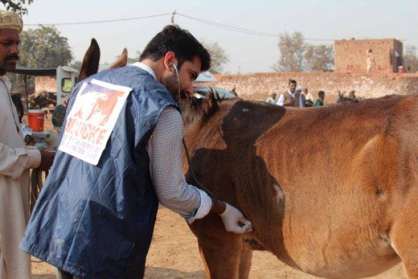 Brooke vet treats horse