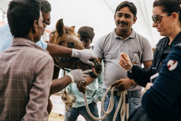 Brooke staff examining a horse at the equine fair