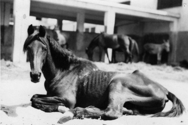 ex war horse