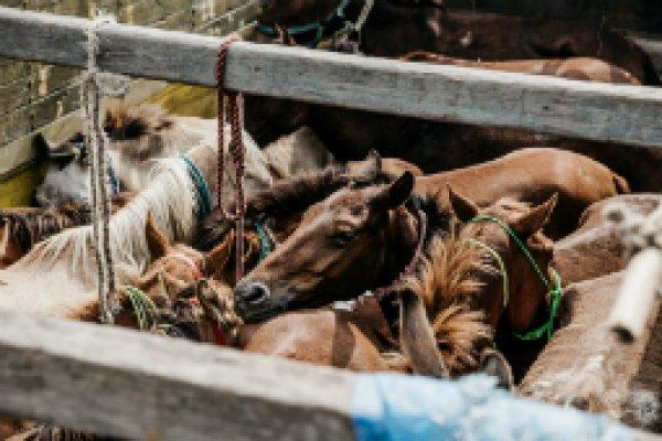 Dewa equine fair