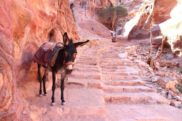 donkey in Petra