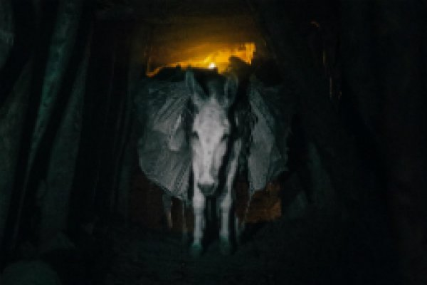 Pakistan coal mine donkey