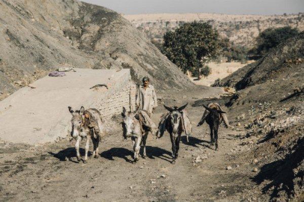 Four coal mine donkeys in Pakistan