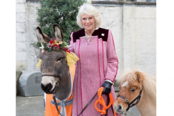 HRH meets Ollie the donkey and Harry the miniature shetland pony