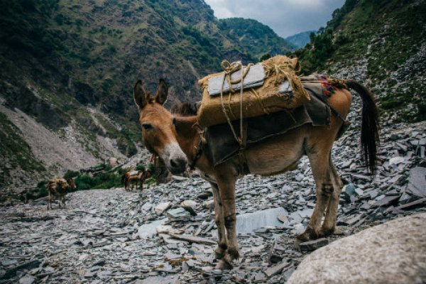 Horse carrying load up a mountain in India