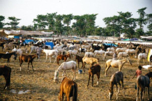 India's equine fairs