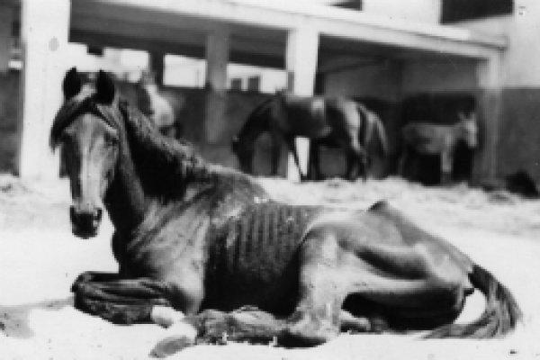Horse in Cairo