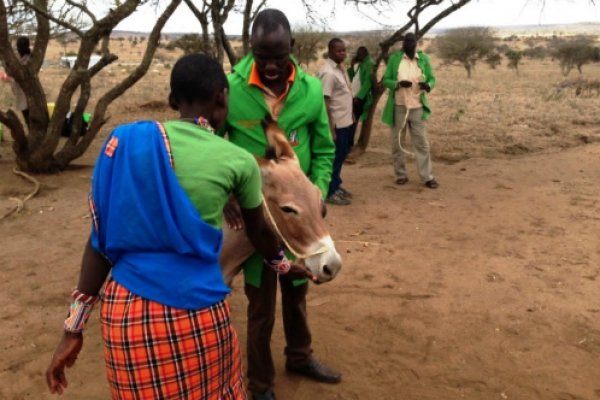 VSF Suisse staff learning how to handle a donkey