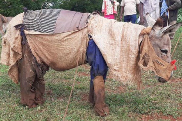 donkey wearing clothes