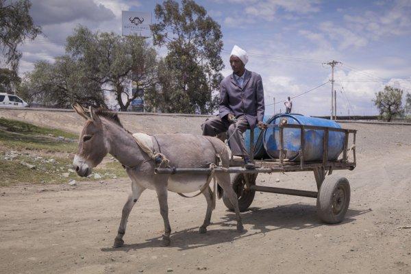Donkey pulling water cart