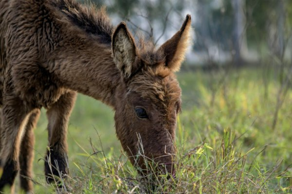 A foal in India