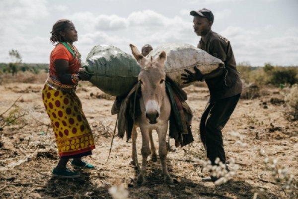 people loading a donkey in kenya