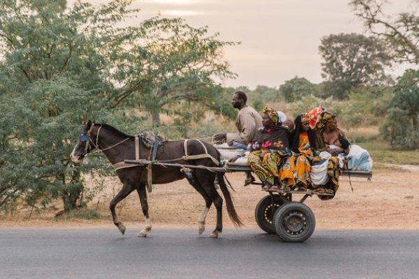 A donkey pulling a cart