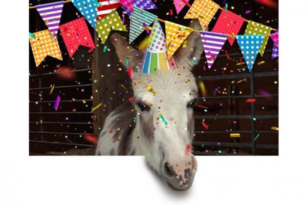 A horse with birthday bunting