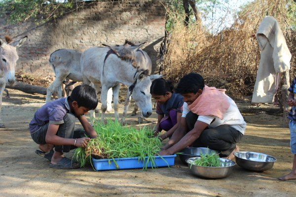 Family collecting green shoots