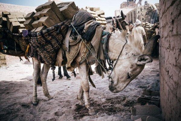 An overburdened donkey in a brick kiln