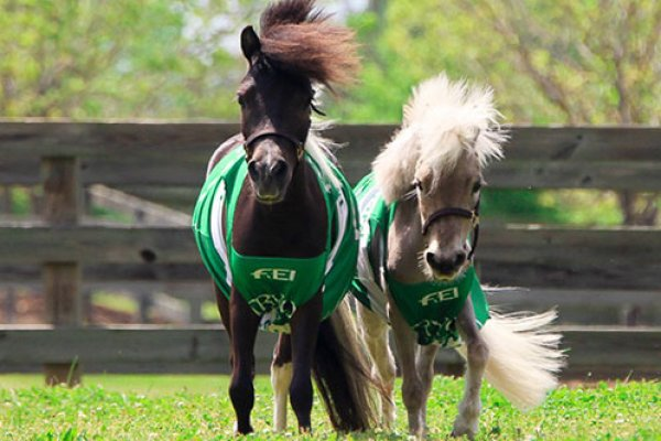 Star and Huck, official mascots of this year's WEG