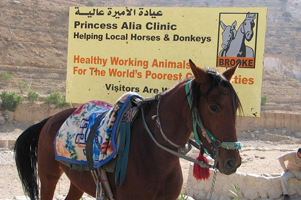 Princess Alia clinic banner