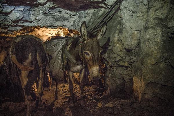 In the coal mine