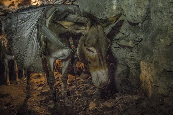 A donkey working in a coal mine, Pakistan