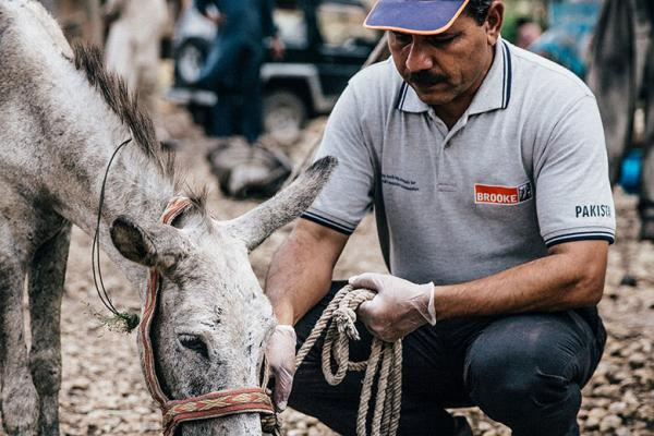 A vet checks a donkey at a coal mine in Pakistan