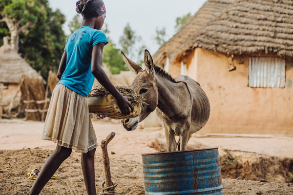 A girl feeding a donkey