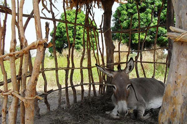 Donkey in a shelter