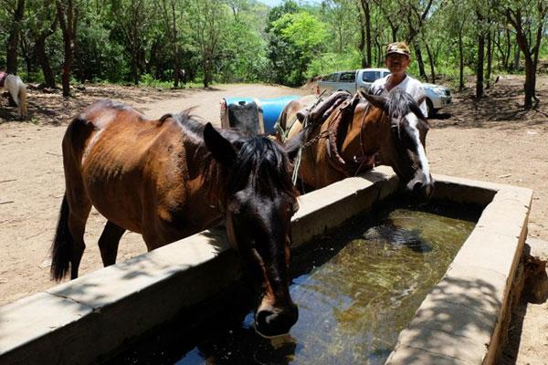 Two horses at a water trough