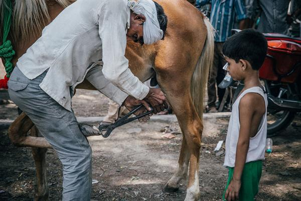 A boy watches as an owner treats an animal's hooves