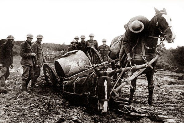 WWI horses used for transport