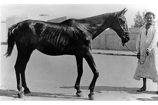 One of the first horses rescued by Dorothy Brooke after her appeal in 1931