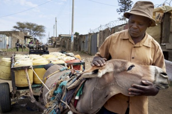 Stephen feels helpless now that he relies on one donkey for work