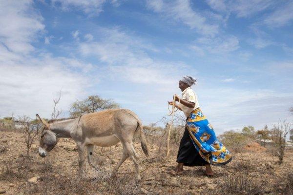 Woman and donkey