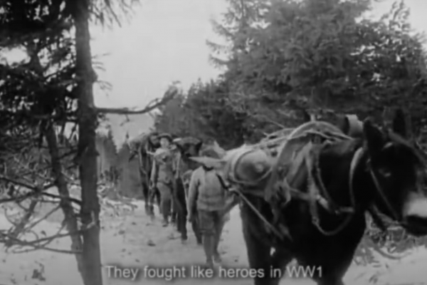 A still from footage of WWI war horses