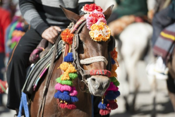 A horse involved in tourism in India