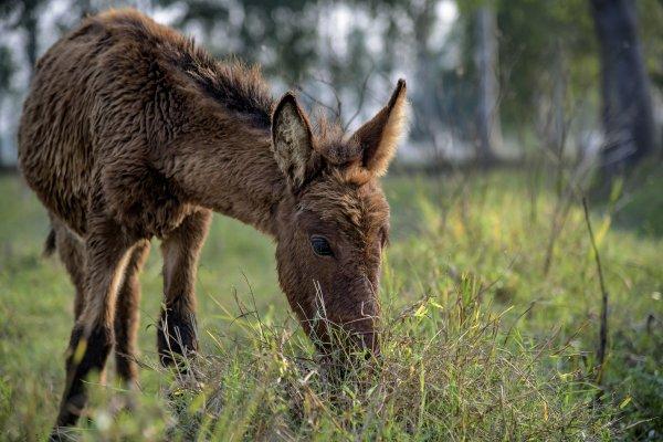 Mule on grass