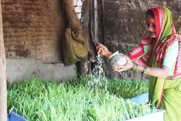 Woman watering crops grown through the Hydroponics pilot