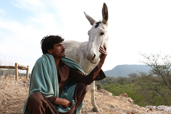 Man and donkey in Pakistan