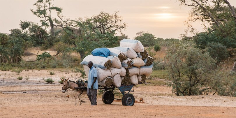 A man and his working equine in Senegal