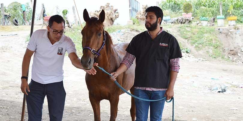 A man carrying out an equine welfare assessment