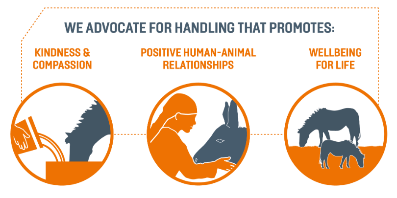 Brooke advocates handling that promotes kindness and compassion, positive human-animal relationships and wellbeing for life